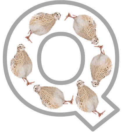 q is for quail  qq quail qq quail